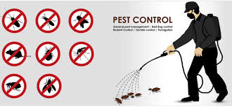 Analysis Pest Management Solutions INDIA Pvt Ltd, Narsingi - Residential  Pest Control Services in Hyderabad - Justdial