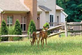 electric fences help keep deer out of