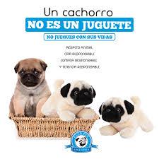Nuevo Juguete Perro Pug Tarjetas De Felicitacion Pugs Perros