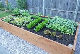 raised garden planter bed