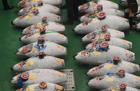 Toyosu fish market in Tokyo opens for ...