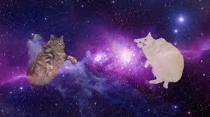 galaxy cat desktop wallpapers top