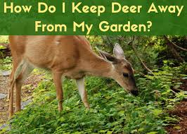 deer deters for your garden