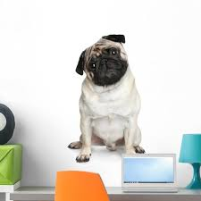 Funny Pug Puppy Sitting Wall Decal By Wallmonkeys Peel And Stick Graphic 24 In H X 16 In W Wm357402 Walmart Com Walmart Com