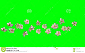 spring flowers falling stock video