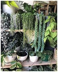 indoor plants decor ideas make you feel