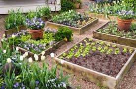 5 best soil for raised garden beds