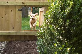 Expert Advice How To Build A Dog Proof Home