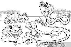 Fotobehang Reptielen En Amfibieen Kleurplaat Pixers We Leven