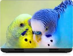 I Birds Bird Exclusive High Quality Laptop Decal Laptop Skin Sticker 15 6 Inch 15 X 10 Inch Ib 5k Skin 2409 Vinyl Laptop Decal 15 6 Price In India Buy I Birds Bird Exclusive High