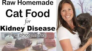 cat food for kidney disease t