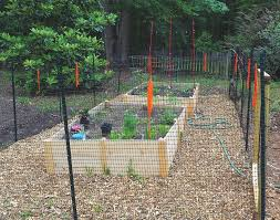 Victory Gardens Spring Up In Chatham The Chatham News Record