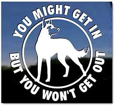 Amazon Com You Might Get In But You Won T Get Out Vinyl Window Decal Belgian Malinois Dog Sticker Kitchen Dining