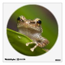 Tree Frog Wall Decals Stickers Zazzle