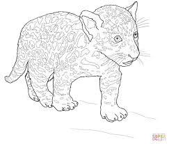 Baby Jaguar Kleurplaat Gratis Kleurplaten Printen