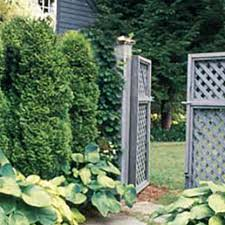 Privacy Shrubs 13 Evergreens To Consider This Old House
