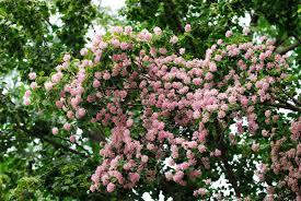 6 flowering trees we love sa garden
