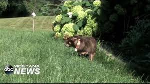 Angie S List An Invisible Fence For Fido Abc Fox Business News Montanarightnow Com