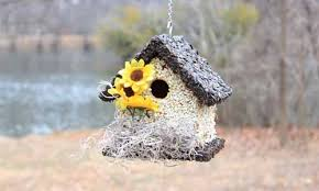home edible birdhouses