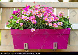 Flower Pot Hanging On Wooden Fence Royalty Free Image 14441097 Panthermedia Stock Agency