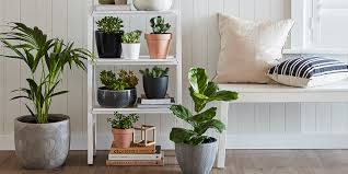 Best Low Light Indoor Plants Bunnings Warehouse
