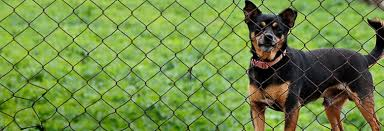 6 Easy Ways To Stop Your Dog From Digging Under A Fence