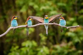 Il faut sauver les oiseaux !
