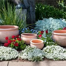 x large terracotta rose bowl