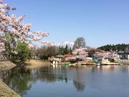 盛岡城後公園と高松の池でお花見をしてきた