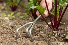 the six best tools for weeding