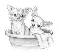 Coloring For Adulst Kleuren Voor Volwassenen Dieren Tekenen