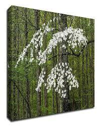 Tangletown Fine Art Dogwood Tree 18 W X 14 H Framed Wall Art Reviews All Wall Decor Home Decor Macy S