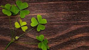 17 Things You Didn T Know About Shamrocks