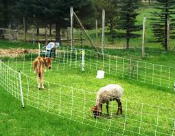 Farm Diversification Adding Sheep To The Equation Spirited Rose Homestead Dairy Farm