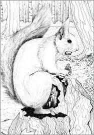 Een Mooie Eekhoorn Kleurplaten Eekhoorn