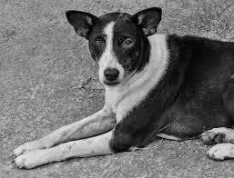 صور كلاب ابيض واسود صور حزينة Sad Images