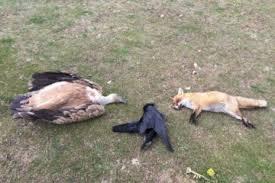 Αποτέλεσμα εικόνας για ζώα υπό εξαφάνιση