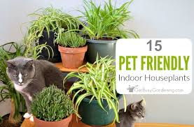 pet friendly house plants 15 indoor