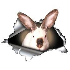 Californian Bunny Rabbit Vinyl Decals For Car And Window Bunny Creations