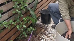 A Tricky Spot Fact Sheets Gardening Australia Gardening Australia