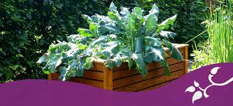 vegetable gardens and soil lehigh