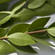 Myrtle Long Green - Buy Online in New Knoxville Flower Shop | BunchesDirect