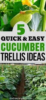 5 Easy Diy Cucumber Trellis Ideas