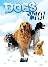 Amazon.com: Dogs 101: Kevin Draine ...