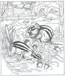 Kids N Fun Kleurplaat Natuur Rondom Het Huis Eekhoorns