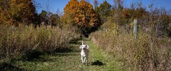 Dog Off Leash Three Rivers Park District