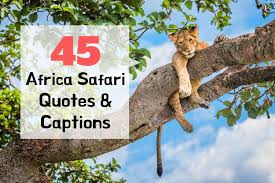 africa safari quotes captions to inspire you to travel to africa