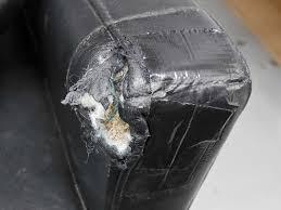 leather sofa or cat scratcher arana team