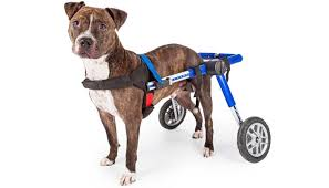 top 7 best dog wheelchair for back legs