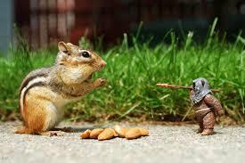 صور حيوانات مضحكة طريفة جدا